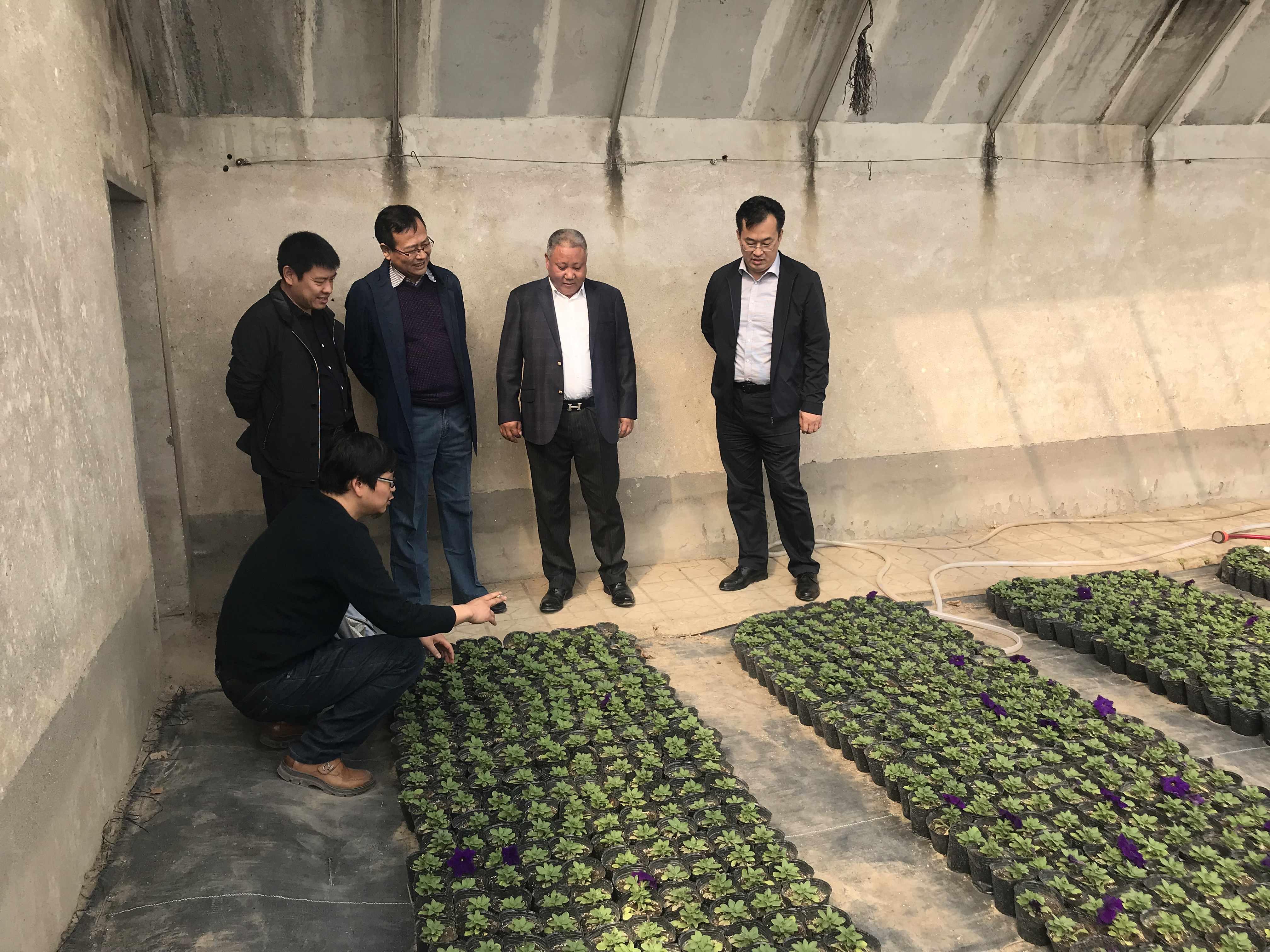 北京花乡花木集团到宏凯公司考察花卉生产情况